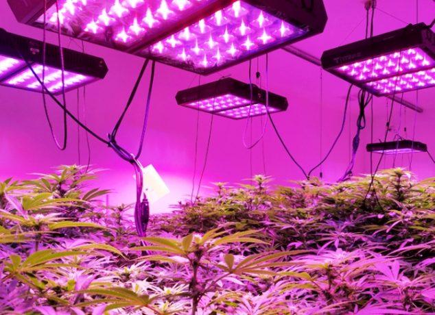 Grow marijuana lights