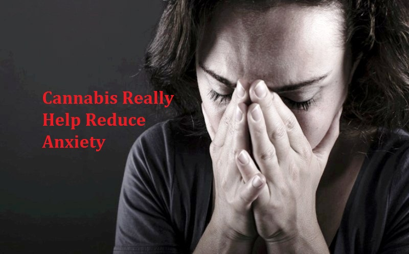 Cannabis Reduce Anxiety