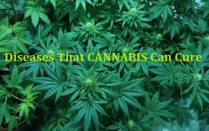 CANNABIS Can Cure