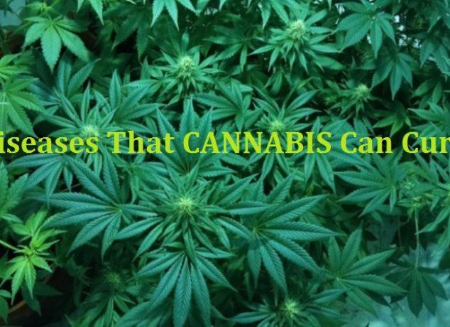 CANNABIS Can Cure