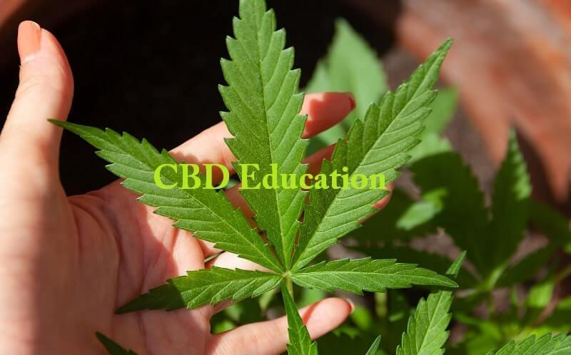 CBD Education